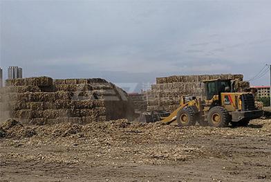 Projet de traitement de biomasse dans le nord-est